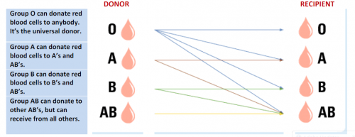 Blood type can it determine paternity – Blood Type Worksheet